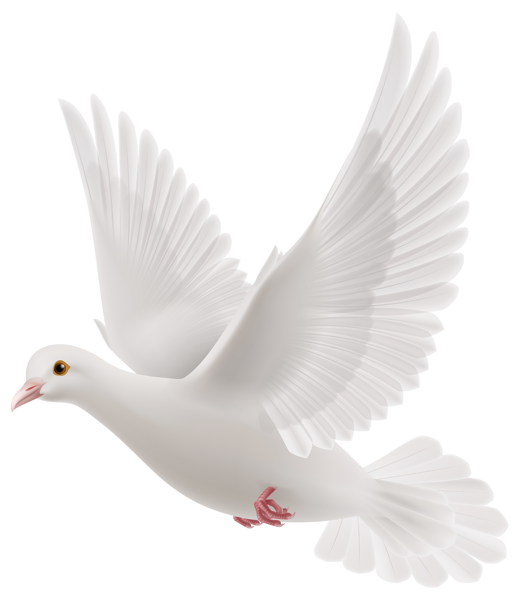 Lady clipart line art. White dove png best