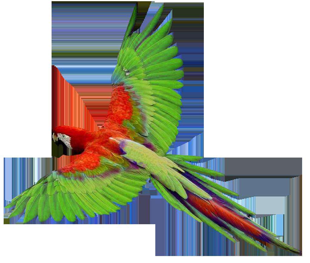 Parrot clipart guacamaya. Flying loro verde im