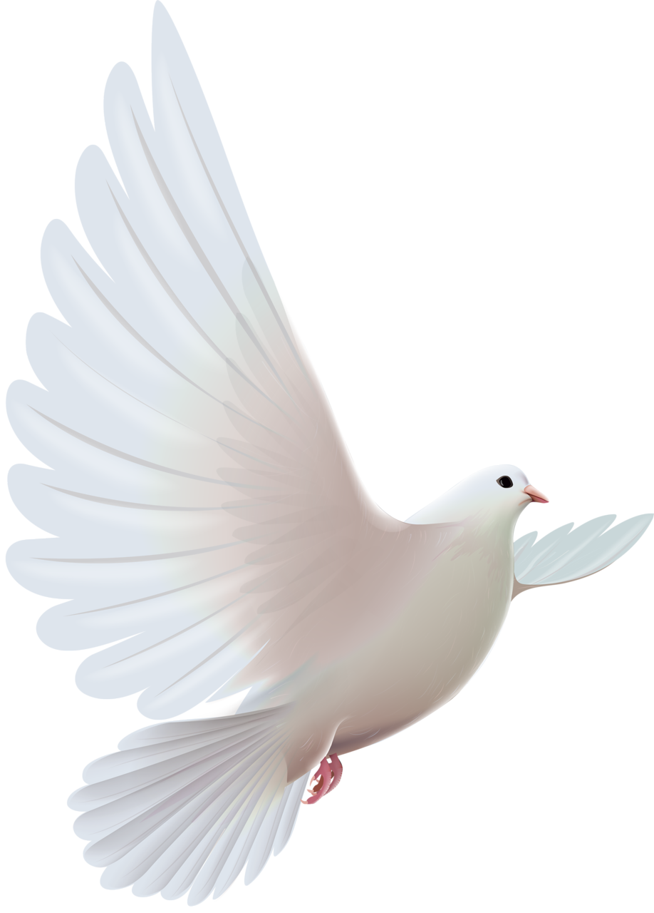 Wing clipart pigeon wing. Doves png pinterest bird