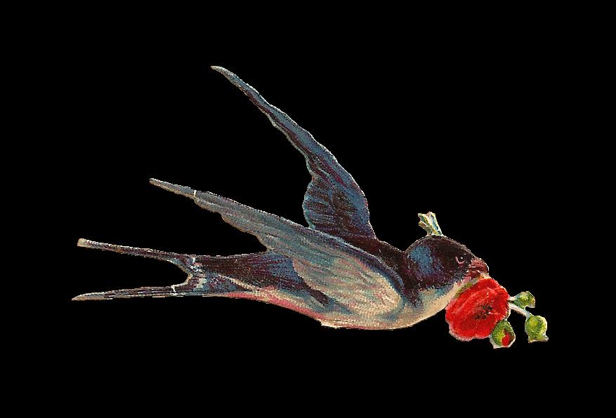 Bird transparent stickpng. Vintage png images