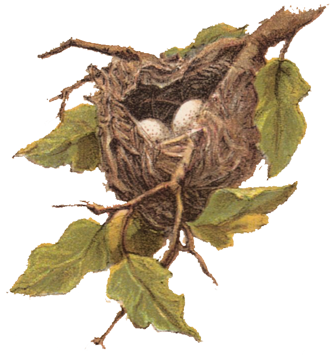 Clipart free vintage. Clip art nest with