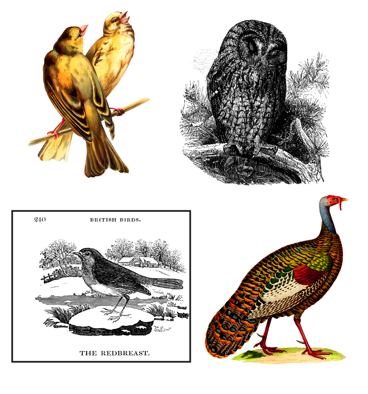 Clipart bird vintage. Collection by victorian lady