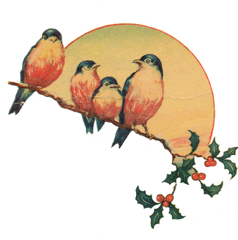 Clipart bird vintage. Love birds png transparent