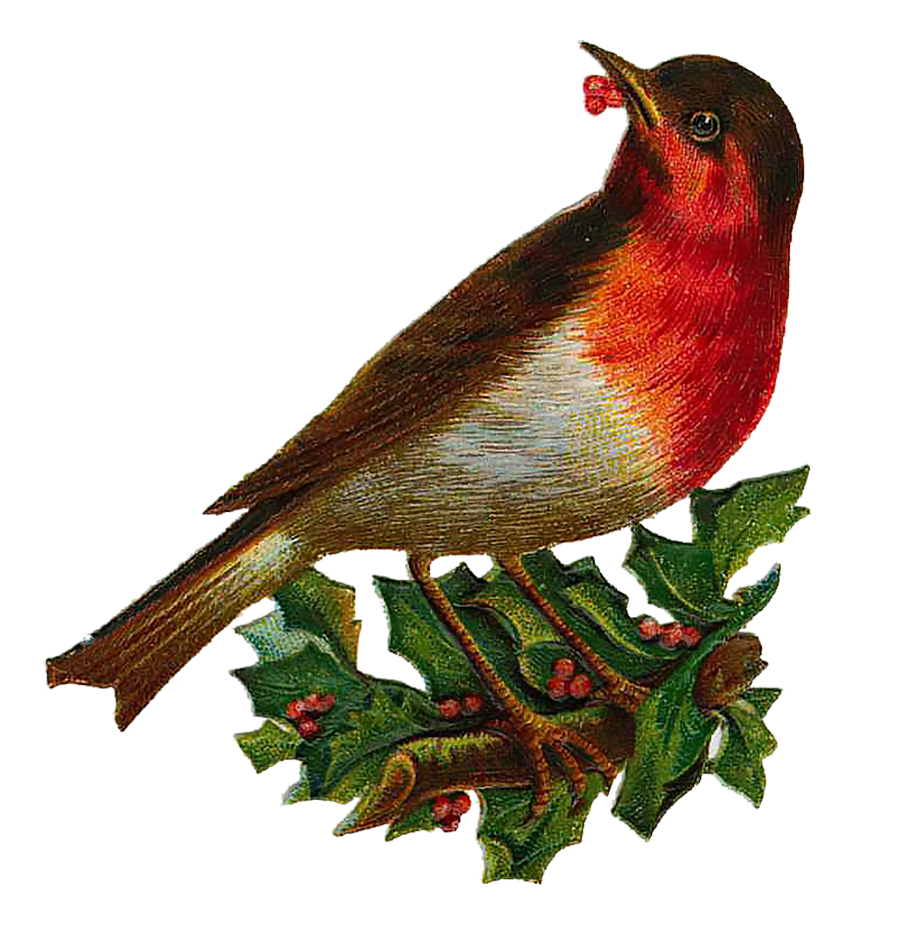 Clipart bird vintage. Victorian archives page of