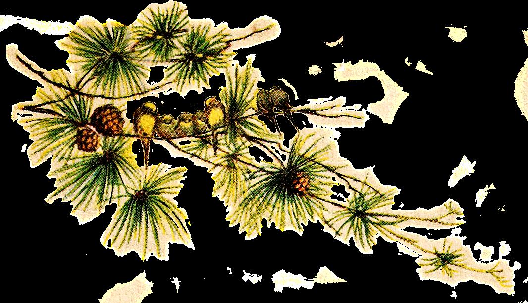 Catnipstudiocollage free clip art. Clipart bird vintage
