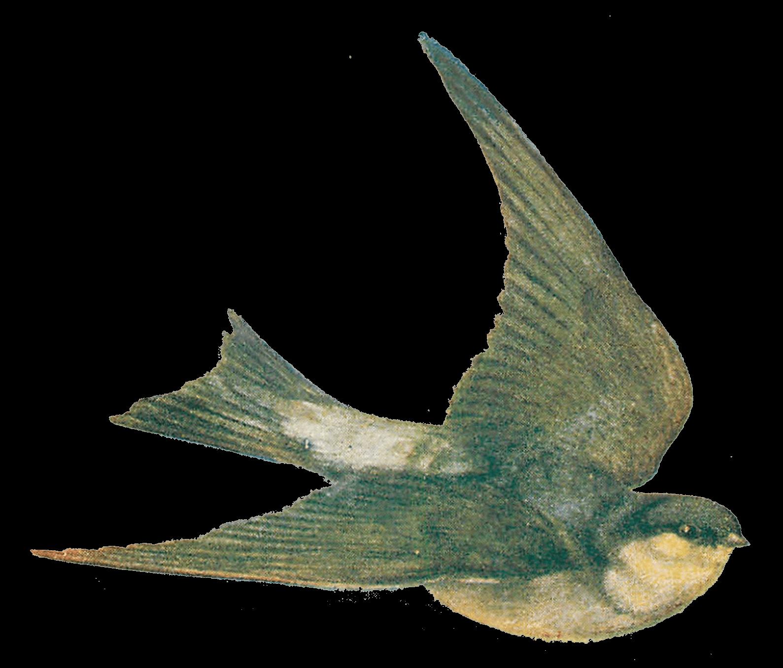 Illustration transparent png stickpng. Clipart bird vintage