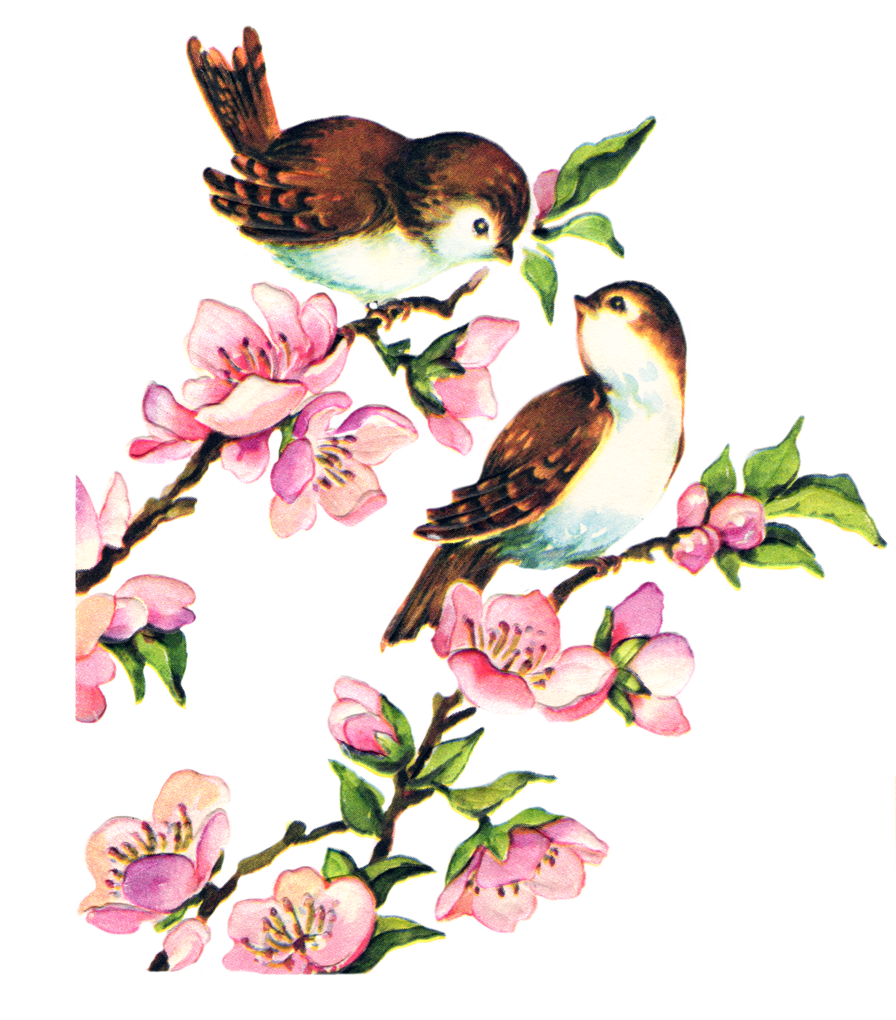 Hummingbird clipart vintage. Watercolour flower floral png