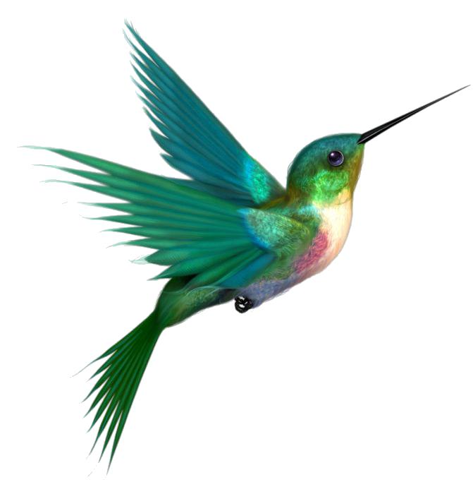 hummingbird clipart realistic