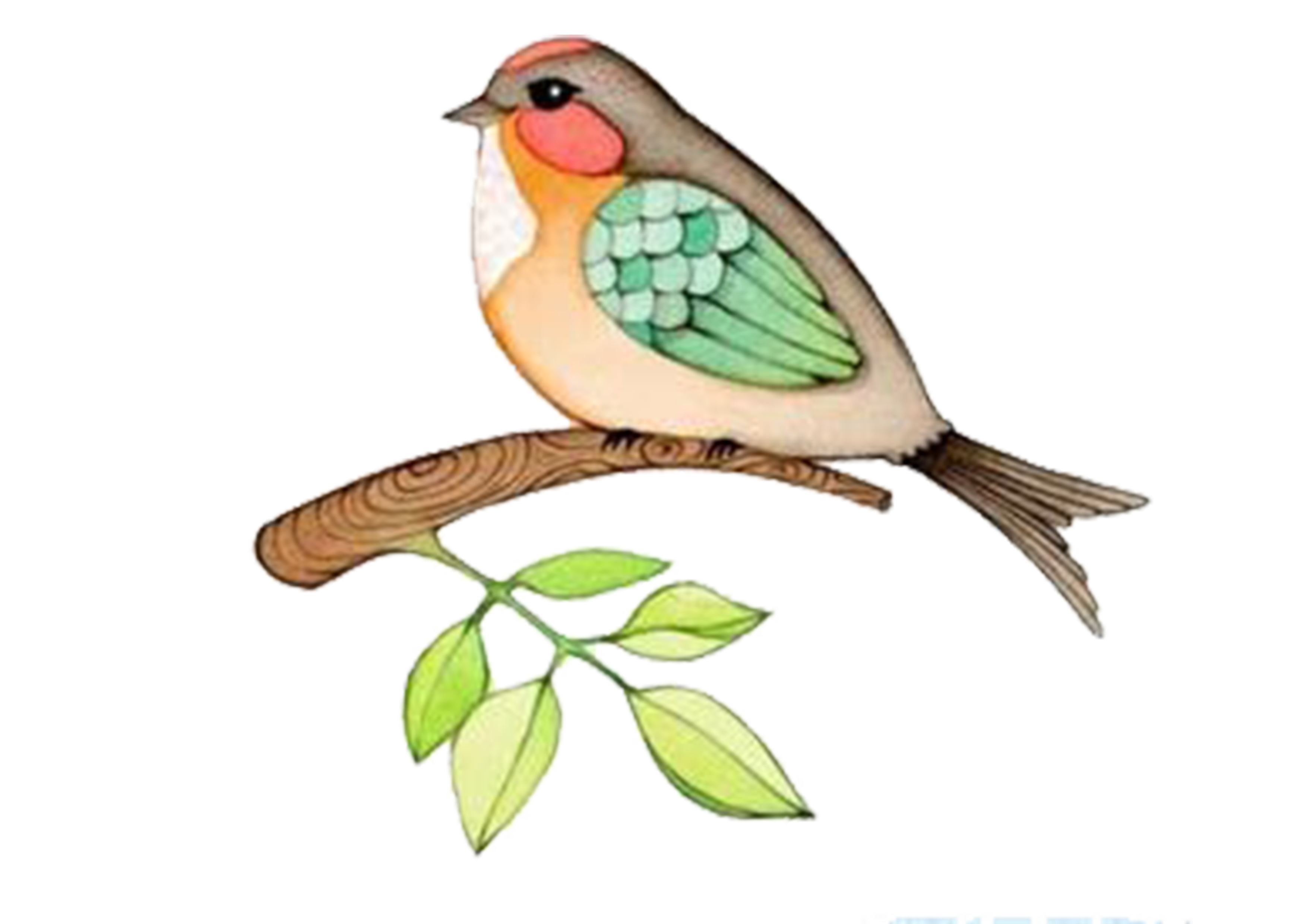 Bird watercolor painting drawing. Parrot clipart perico