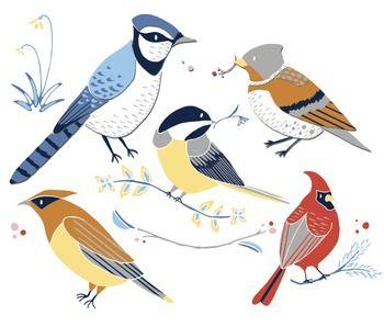Birds clip art cardinal. Winter clipart bird