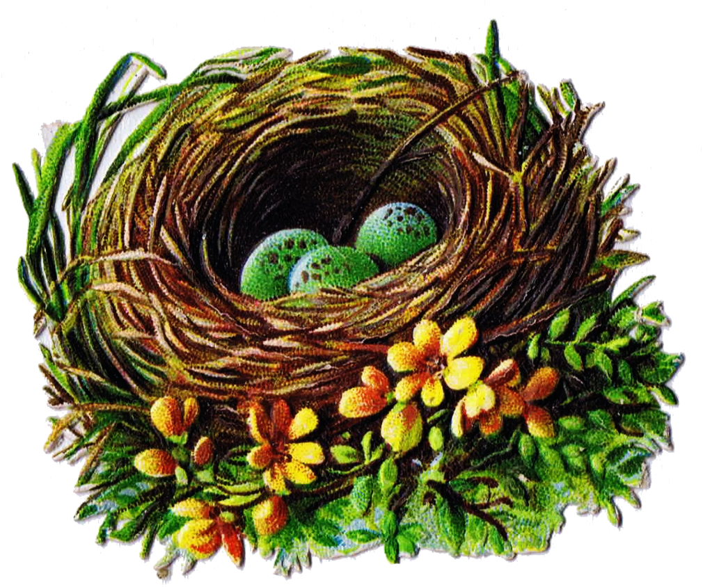 Eggs clipart nest. Bird and egg graphics