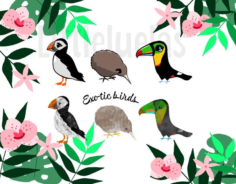 Bird tropical leaf summer. Clipart birds zoo