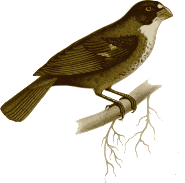 Clipart birds brown. Bird on branch clip