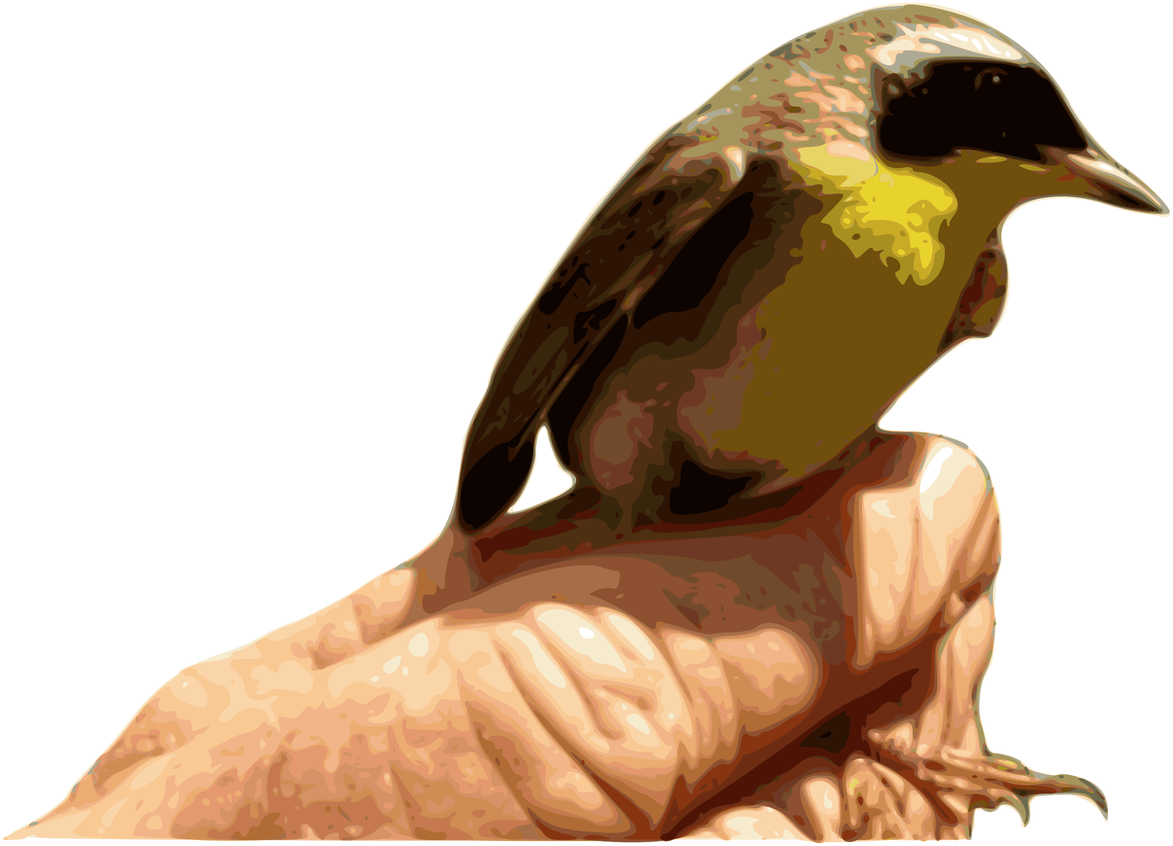 Yellowthroat bird big image. Clipart birds brown
