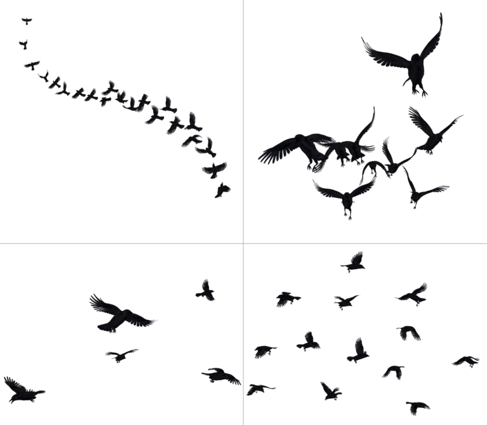 Crows in flight png. Clipart birds bunch