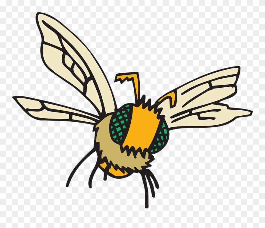 Clipart birds insect. Bee cliparts buy clip