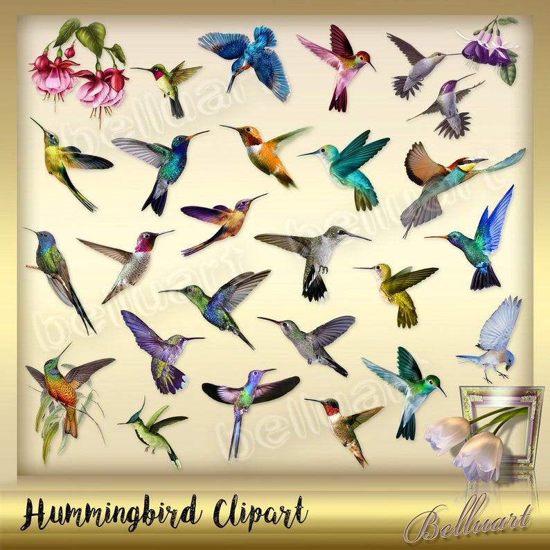 hummingbird humming clip. Clipart birds insect