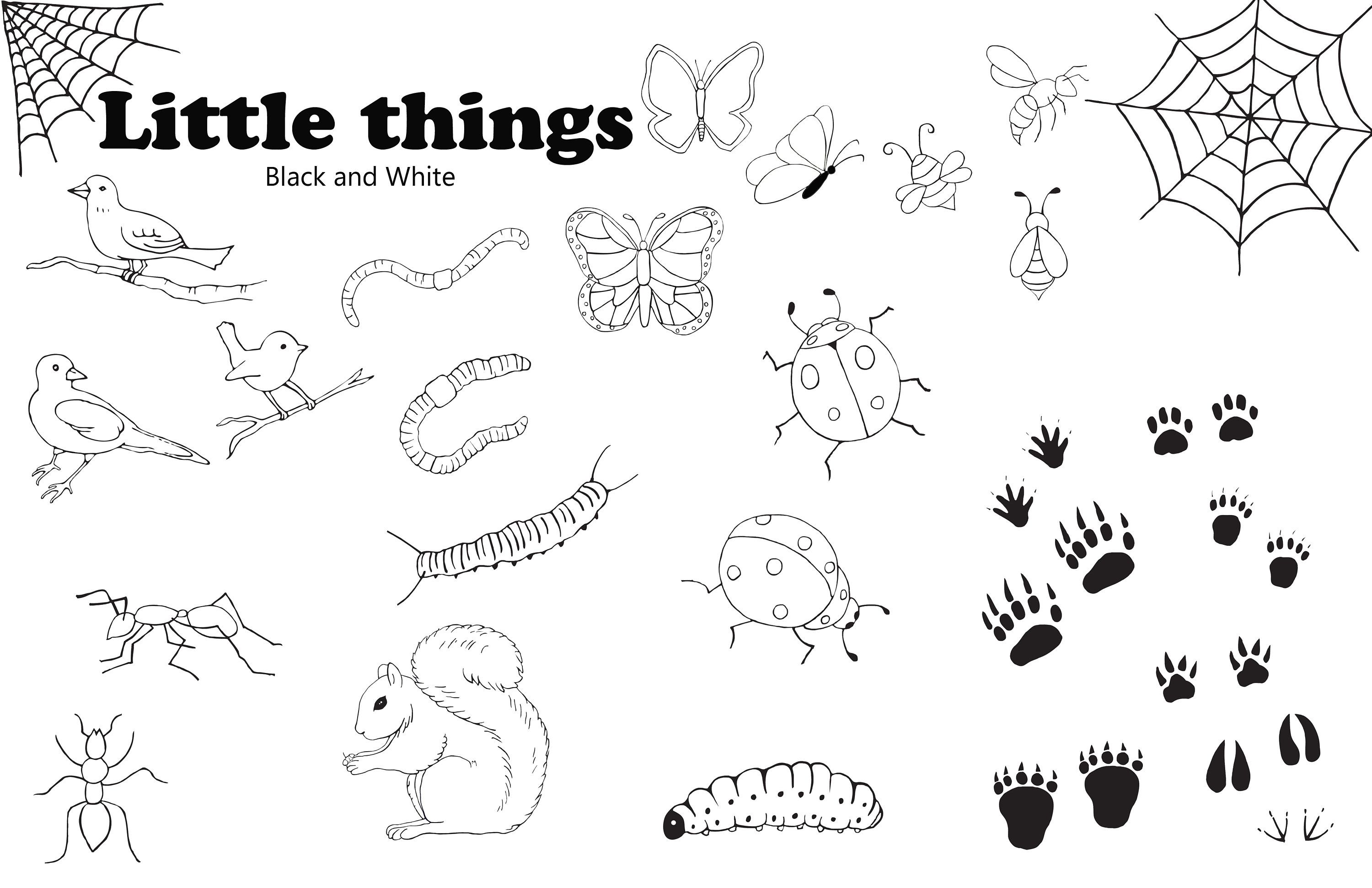 Black white insects bugs. Clipart birds insect