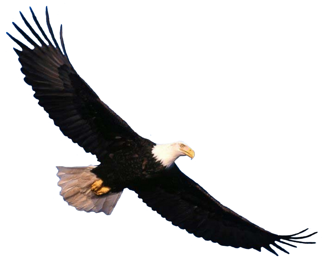 Five isolated stock photo. Eagles clipart sky