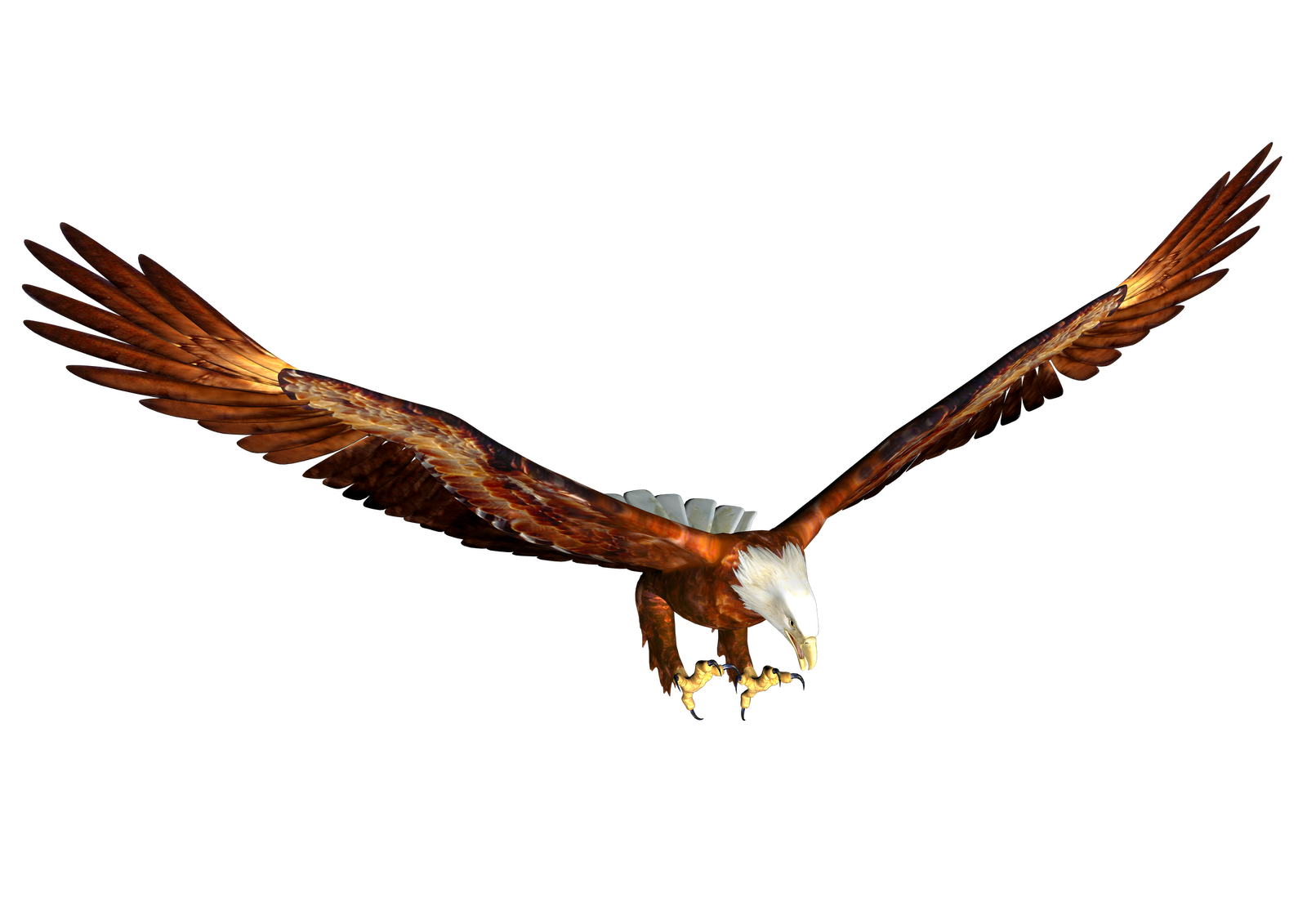 Png image free picture. Eagle clipart diving