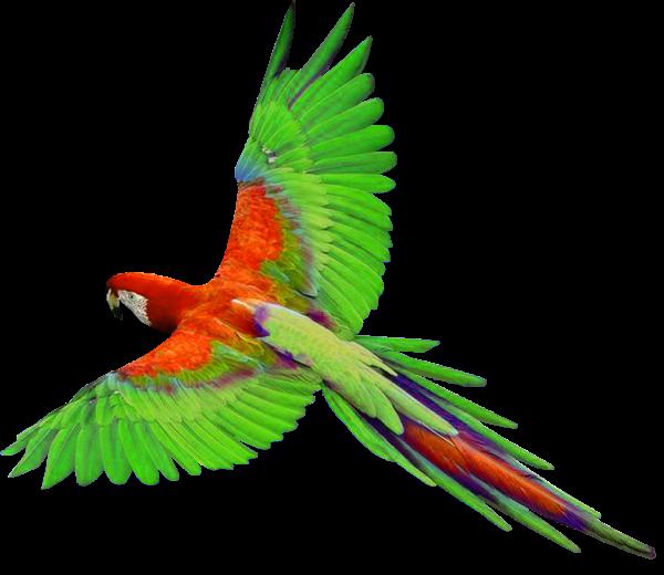 Crafting bird theme pinterest. Parrot clipart tail