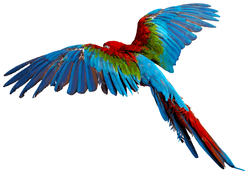 Parrot clipart guacamaya. Birds and things with