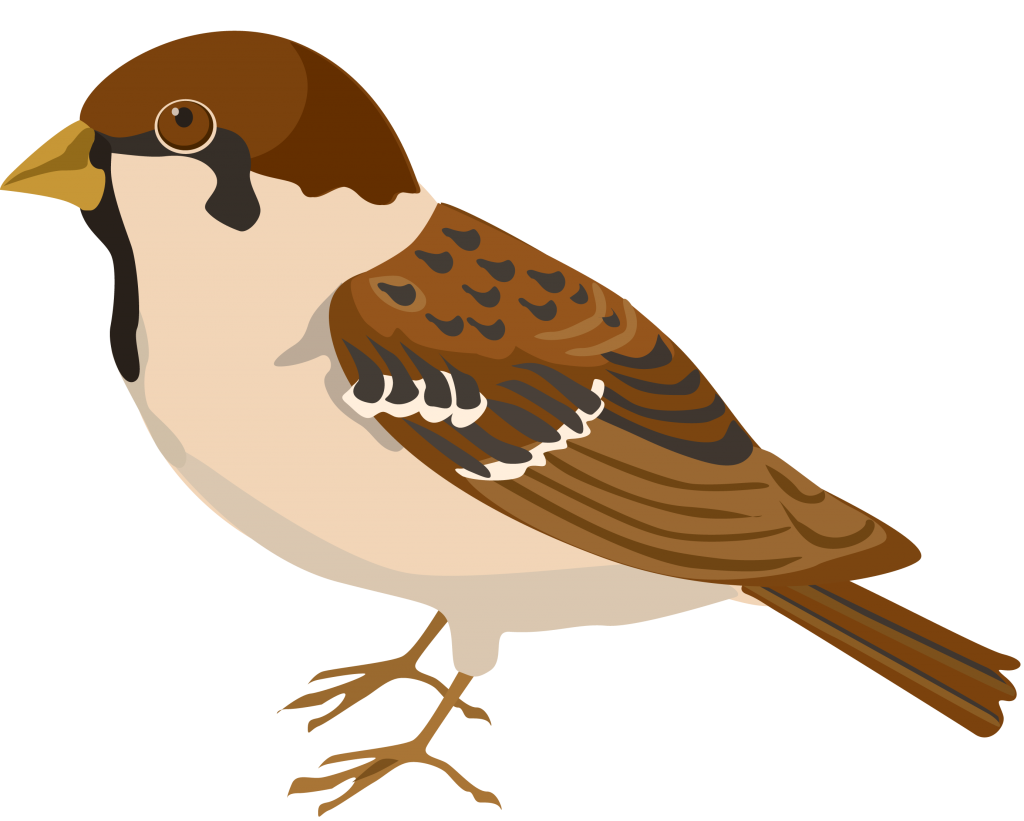 Clipart birds pipit. Sparrow png peoplepng com