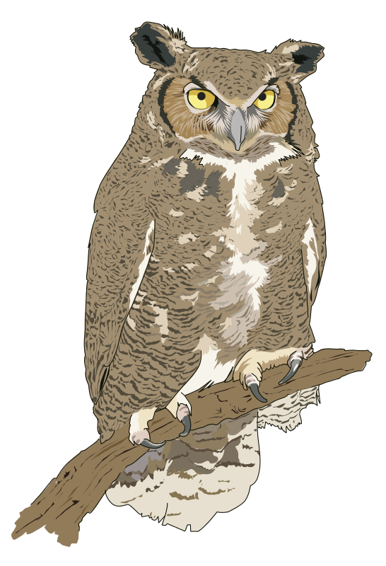 Realistic owl bird . Clipart birds prey
