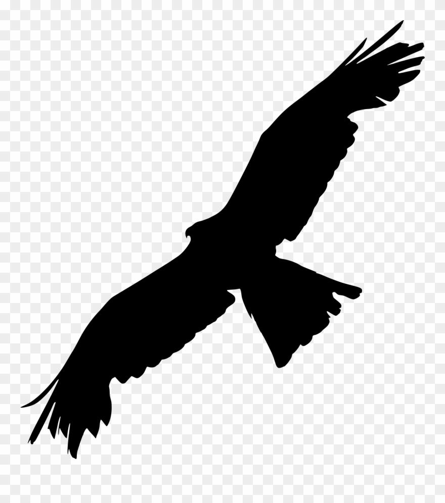 Bald eagle bird of. Clipart birds prey