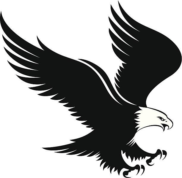 Clipart birds prey. Bird of eagle landing
