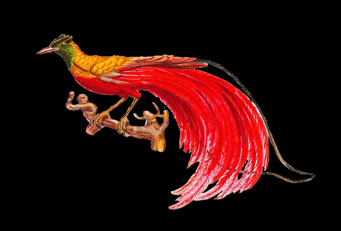 Antique images bird clip. Clipart birds tail