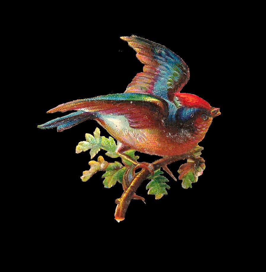Hummingbird clipart beautiful bird. Antique images clip art