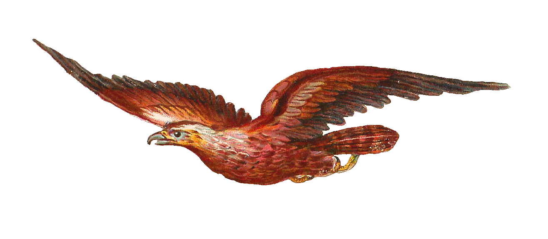 Falcon prey