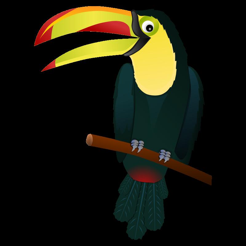 Clip art toucan cliparts. Clipart birds zoo