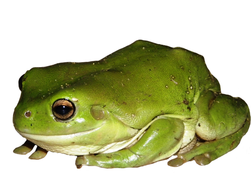 Clip art green tree. Frames clipart frog