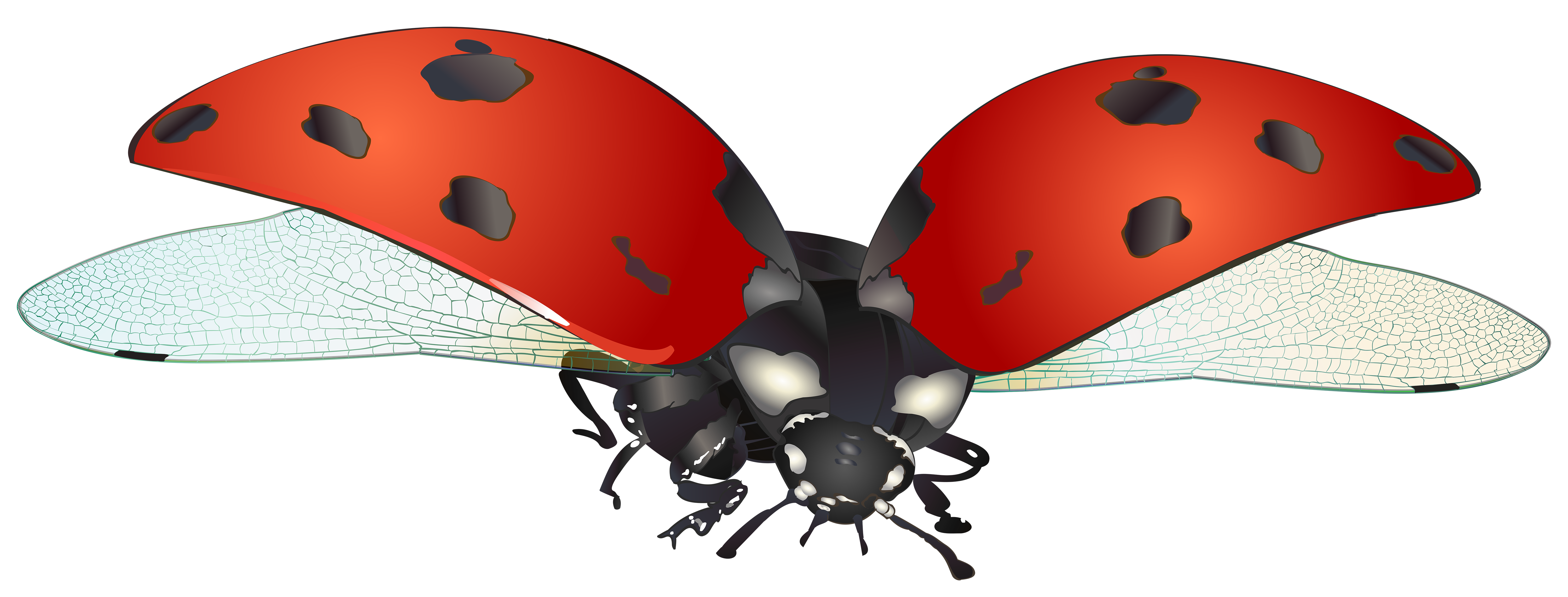 Ladybugs clipart birthday. Flying ladybug png clip