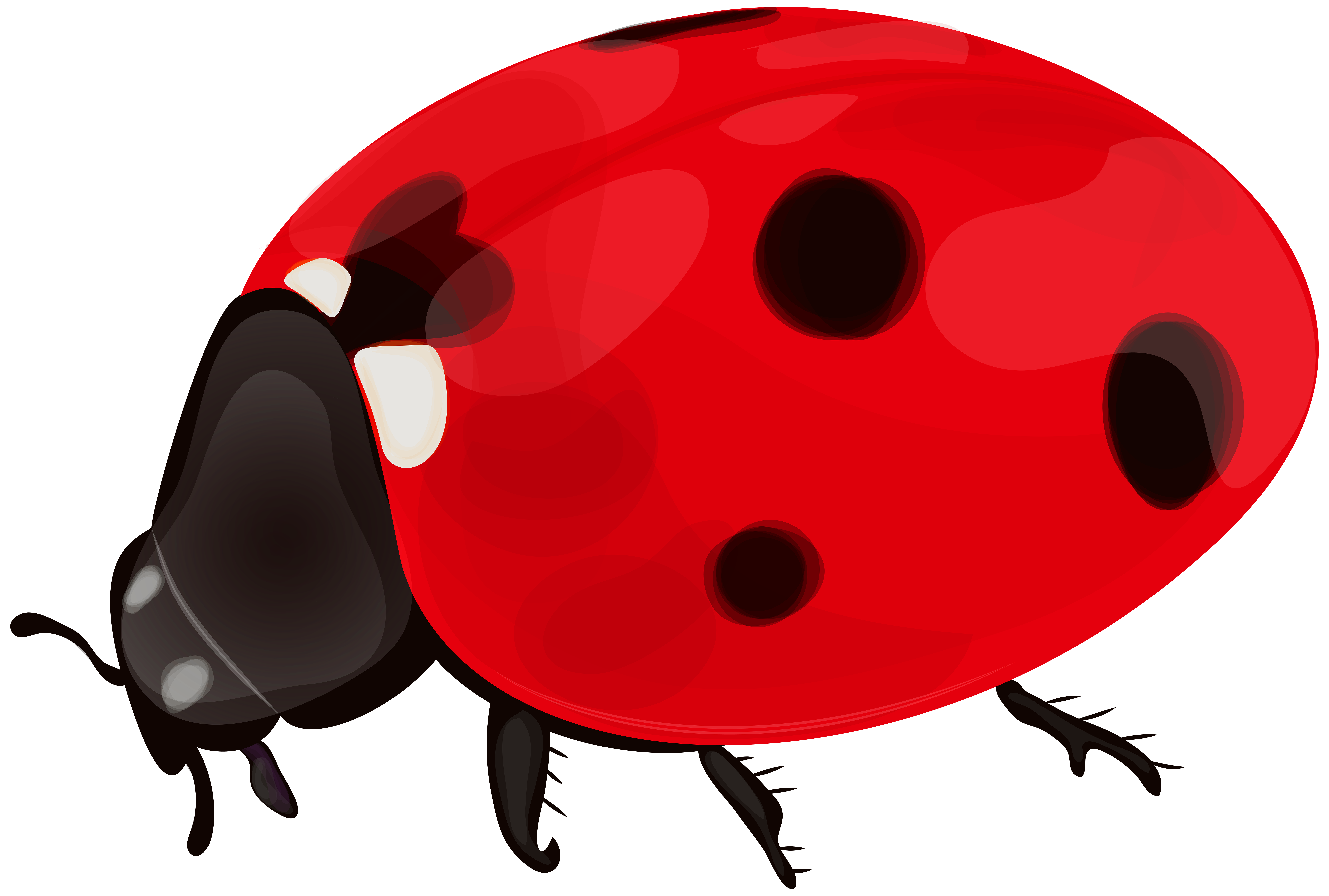 Png clip art gallery. Valentine clipart ladybug