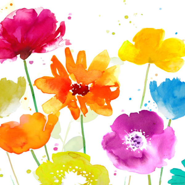 Poppy clipart watercolor. Fleurs flores flowers bloemen