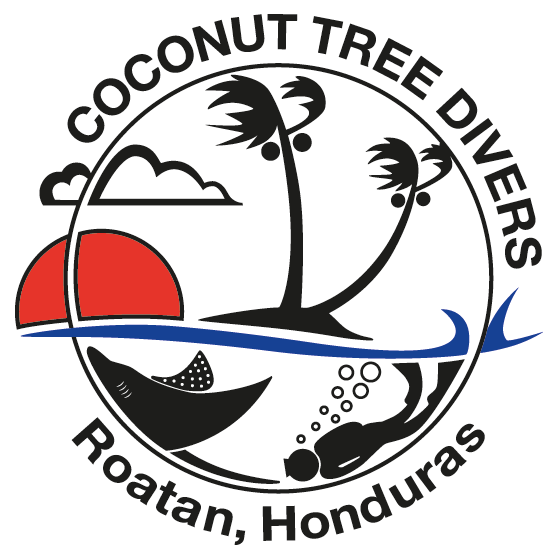 New page coconut tree. Clipart boat scuba