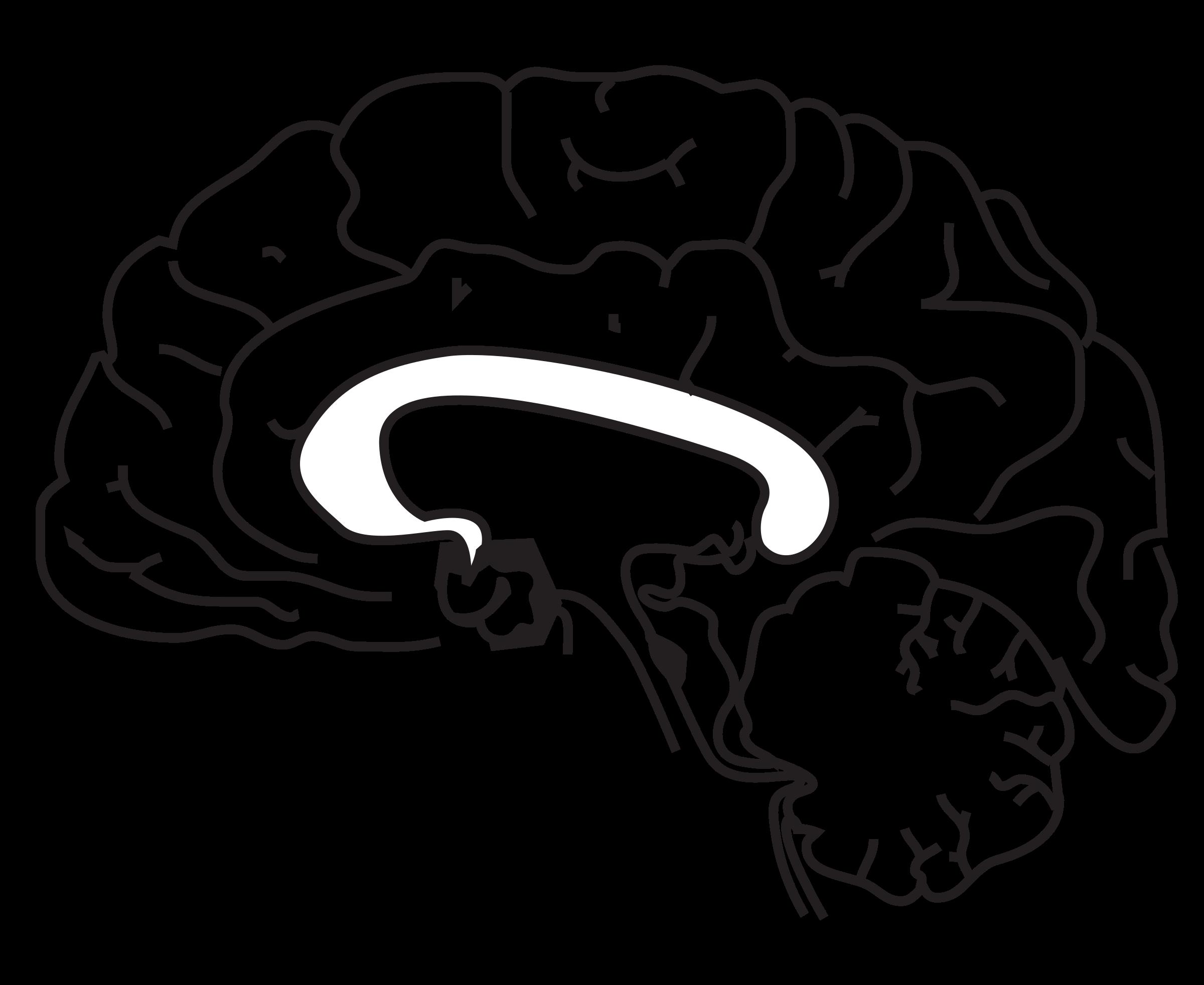 Gear clipart brain. Side cutaway big image
