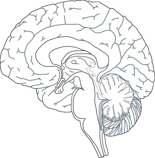 Clipart box brain. Inside view clip art