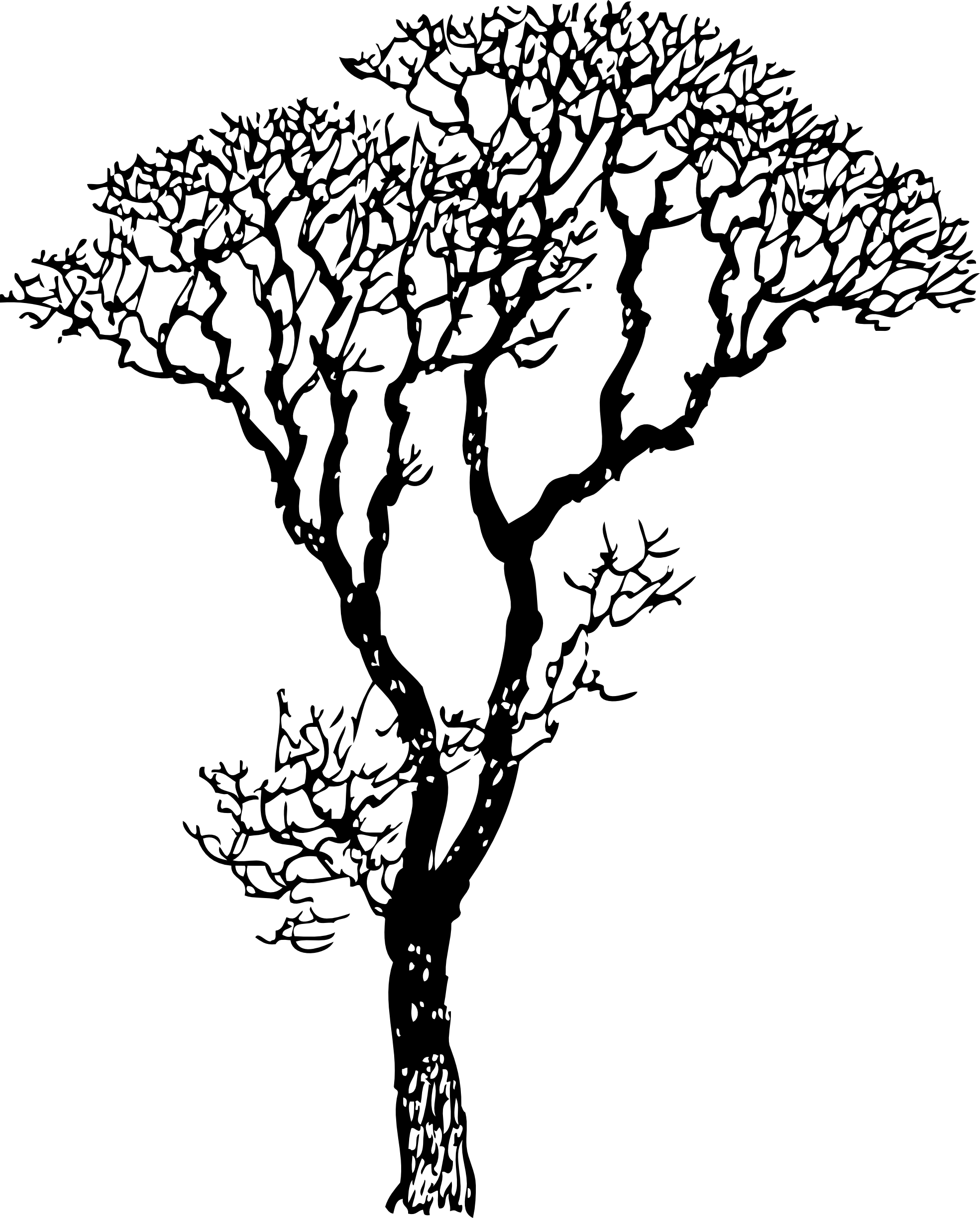Skin clipart black and white. Bare tree line art