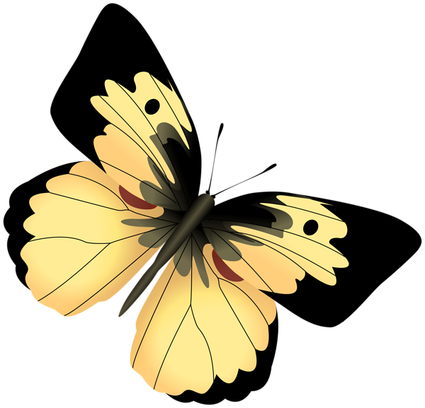 Yellow and black butterfly. Moth clipart botanical illustration