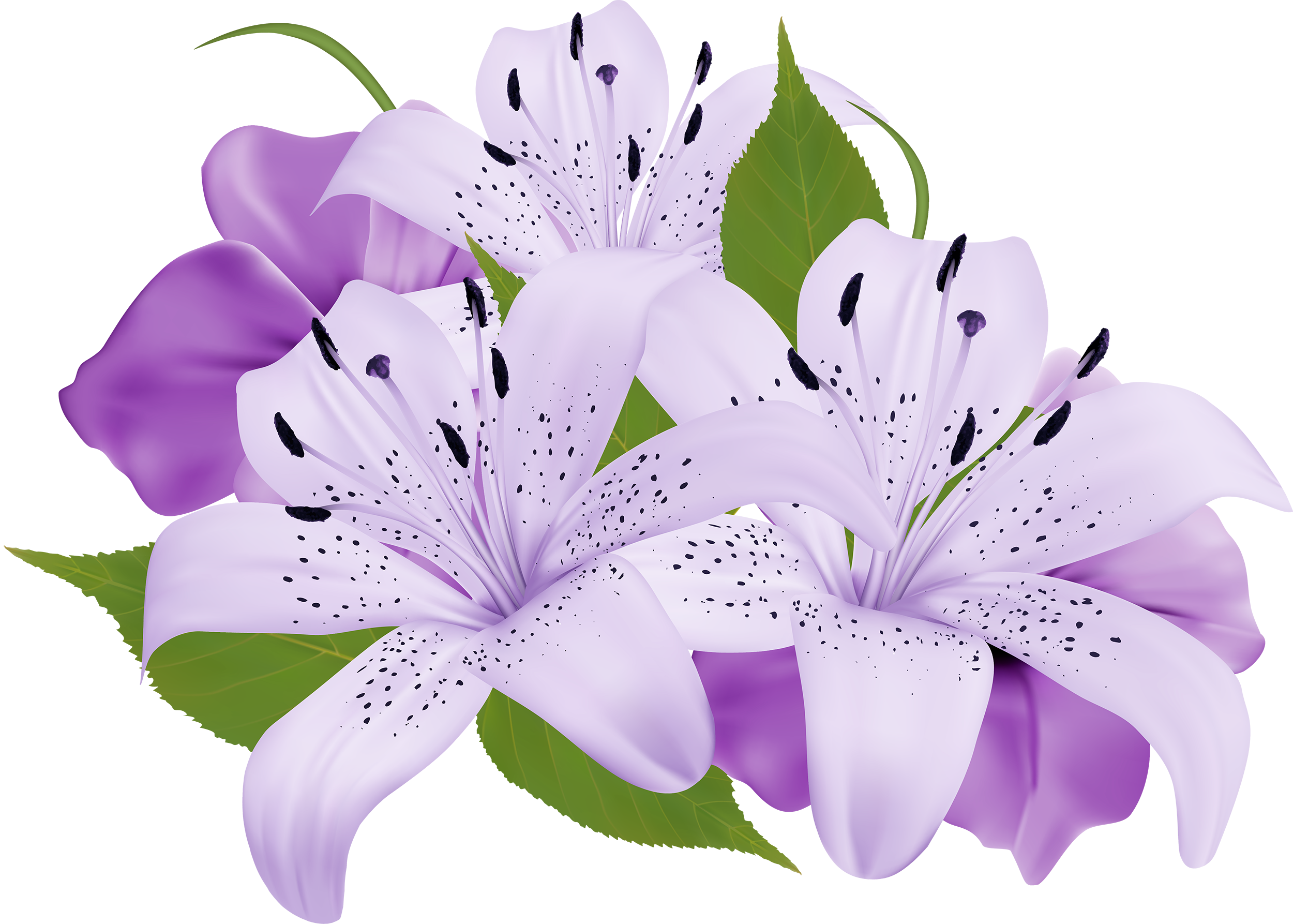 Beautiful flower png. Purple decorative flowers clipart
