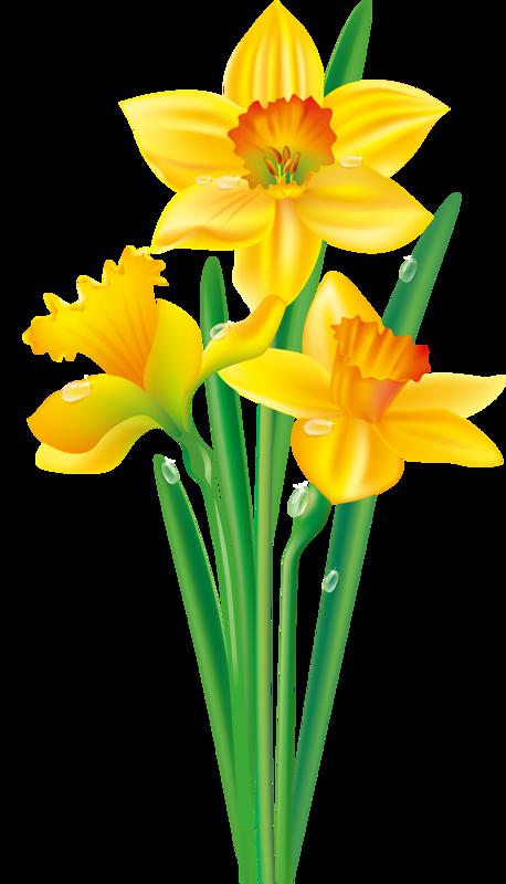 e ec da. Clipart borders daffodil