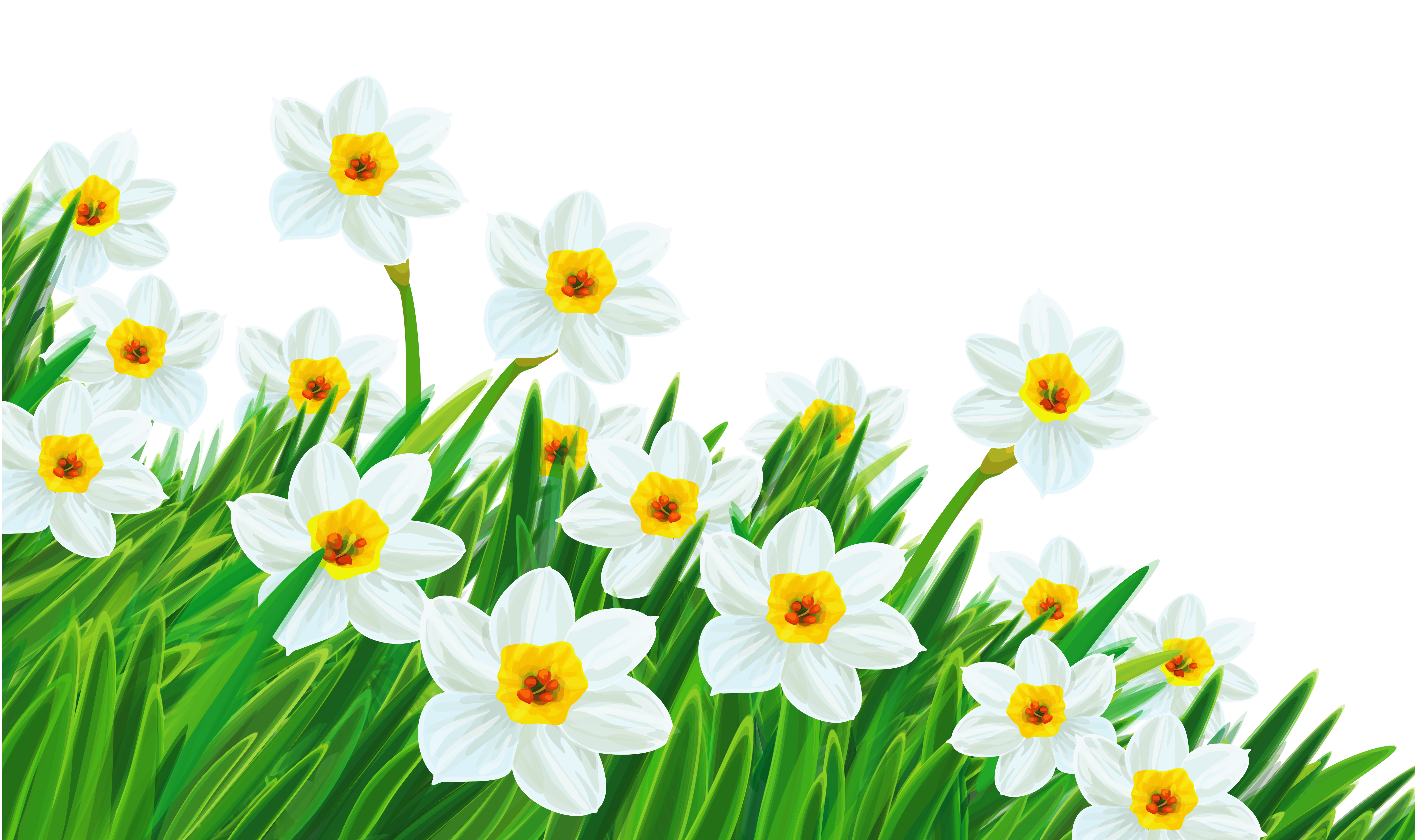 With daffodils tavasz spring. Daisies clipart flores