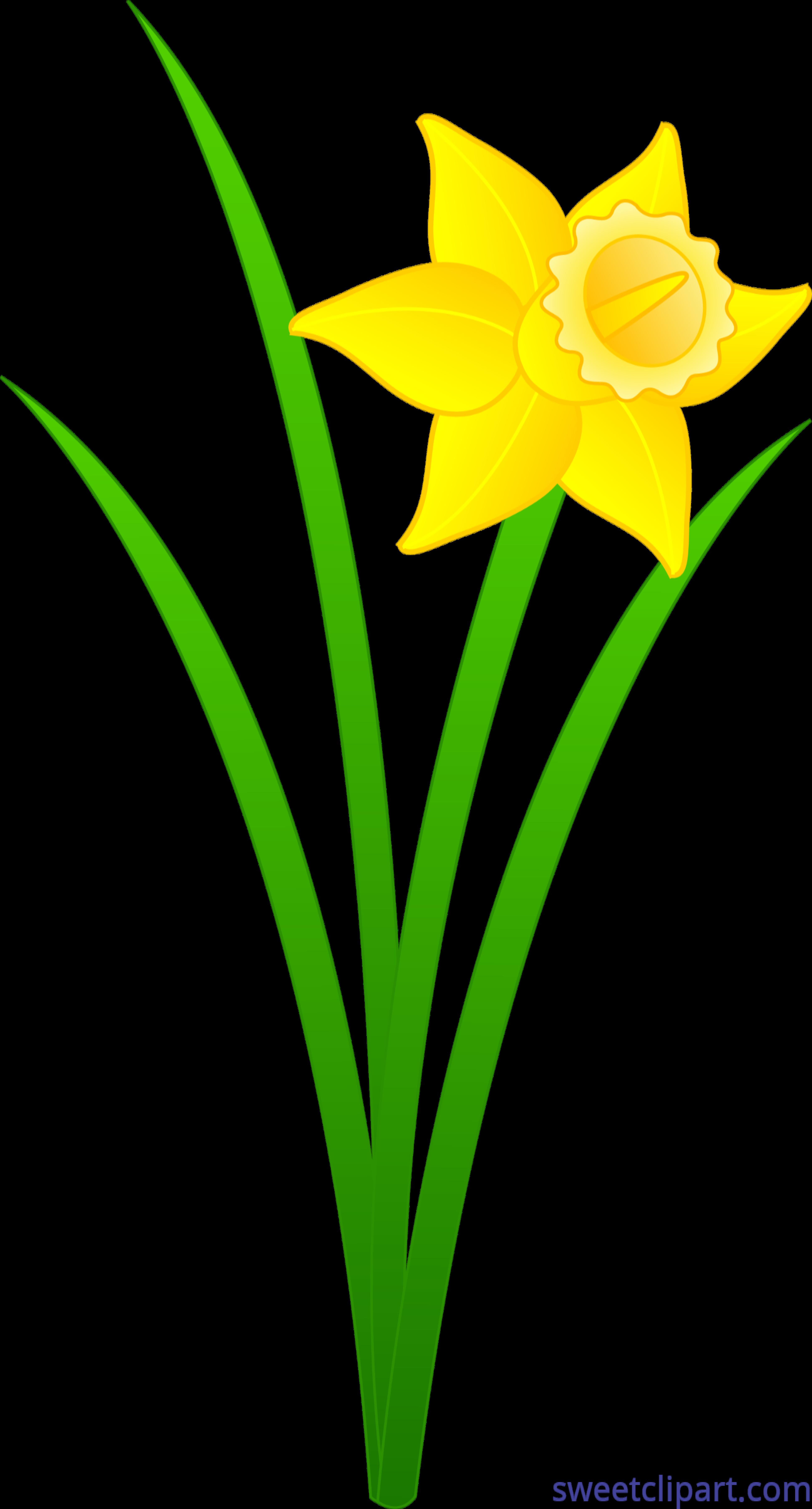Golden clip art sweet. Clipart borders daffodil