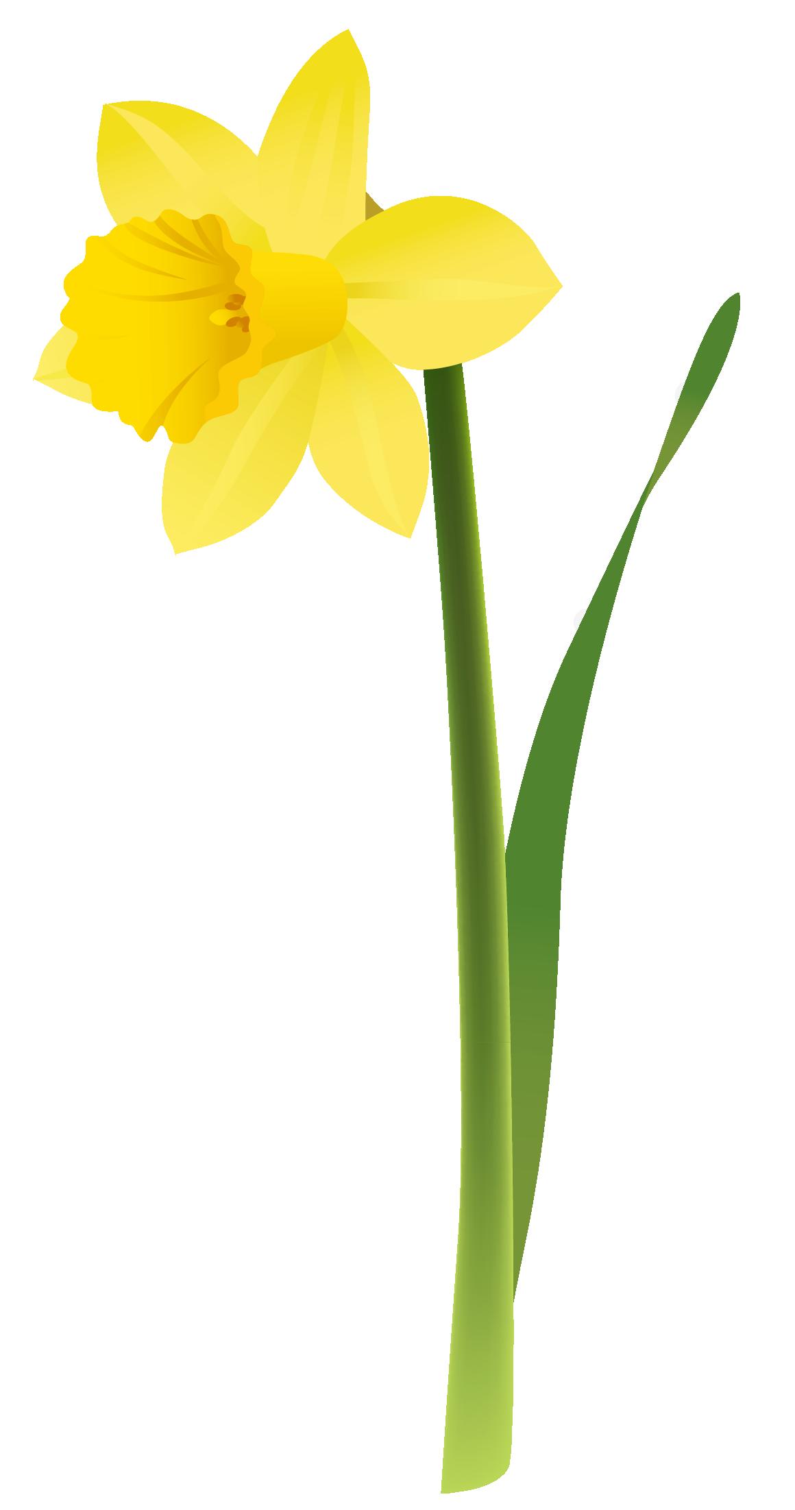 Gate clipart spring garden. Yellow daffodils gratitude pinterest