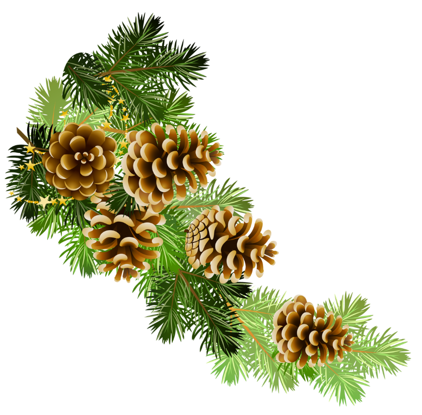 Woodland clipart garland. Pine and cones branch