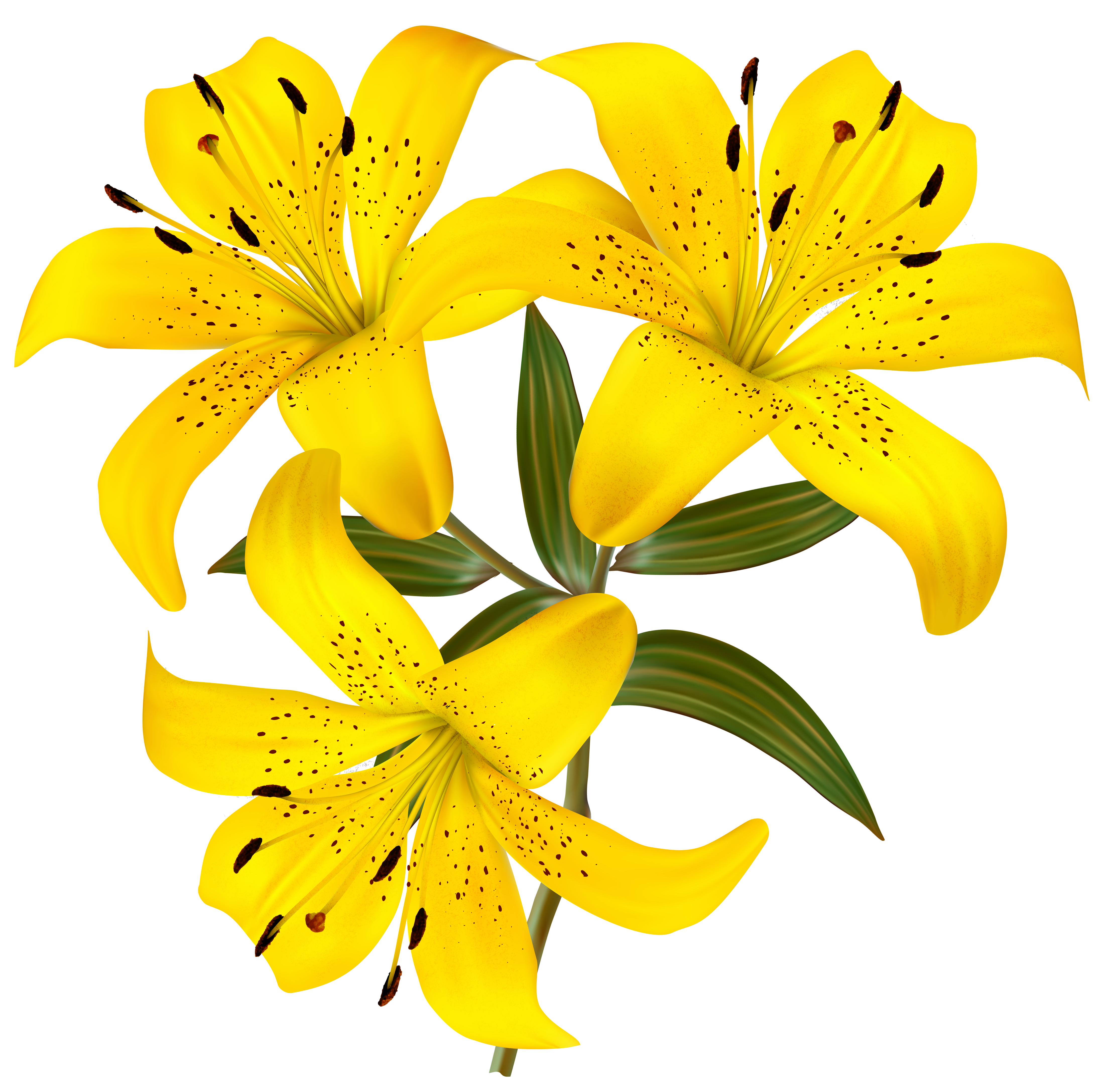 Cross clipart lily. Tiger at getdrawings com